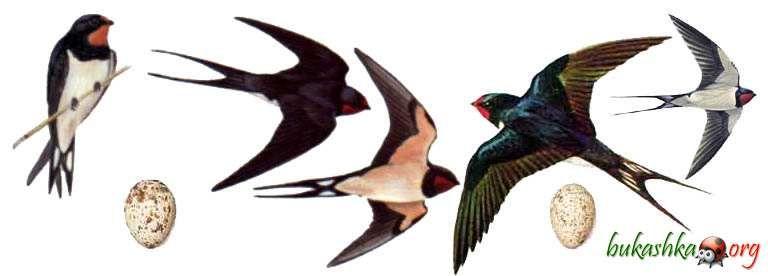 фото как летят